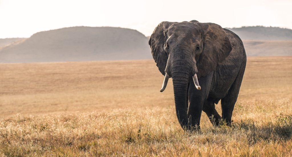 In banking, can the old elephants dance?